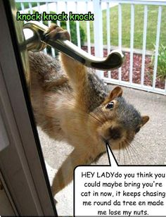 animal humor | Animal Humor squirrel funny