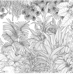 Rainforest Escape My Island Animal Exotic Flower and Tropical Plant Color Book 9781624143182 Jade Gedeon Books Flower Coloring Pages, Colouring Pages, Coloring Books, Botanical Line Drawing, Botanical Drawings, Plant Drawing, Wall Drawing, Black And White Drawing, Exotic Flowers