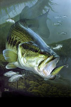 Free Bass Fishing Wallpaper - WallpaperSafari