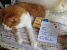 Sissy loves MeowMix Simple Servings #FreeSamp #ForYourPets #MyMagazineSharing