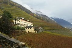 Nun geht es zum renommierten Weingut Triacca – La Gatta, welches sich auch in Bianzone befindet. Das Weingut La Gatta wurde vor 500 Jahren erbaut, war Dominikanerkloster, später Sommerresidenz der Adelsfamilie De Gatti, ging in den Besitz Winzerfamilie Mascioni über und wurde 1969 von der Familie Triacca übernommen. Es ist eines der Vorzeige-Weingüter im Veltlin. Wir geniessen eine Weingutbesichtigung, sowie Degustation und Quick-Lunch auf dem Weingut. Adele, Country Roads, Mountains, Nature, Travel, Gourmet, Summer Recipes, Viajes, Traveling