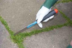 Unkraut zwischen Steinplatten entfernen – 6 effektive Tipps