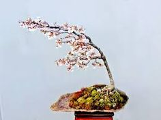 Resultado de imagen para niña mirando bonsai