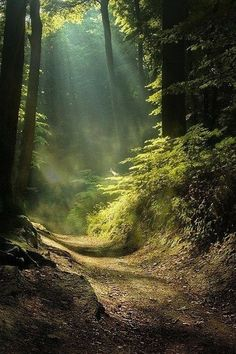 in the forest Light in the forestLight in the forest Light in the forest Beautiful World, Beautiful Places, Beautiful Pictures, All Nature, Amazing Nature, Landscape Photography, Nature Photography, Photography Tips, Wedding Photography