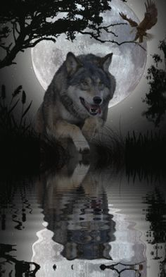 Shimmering Water Reflecting the Wolf With the Help of a Full Moon. Wolf Photos, Wolf Pictures, Wolf Spirit, My Spirit Animal, Beautiful Creatures, Animals Beautiful, Animals And Pets, Cute Animals, Wolf Hybrid