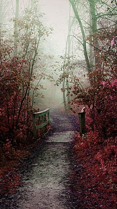 Nature iPhone 6 Plus Wallpapers - Misty Autumn Path iPhone 6 Plus HD Wallpaper  #iPhone #6 #plus #wallpapers