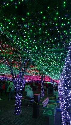 Christmas in Canberra, Australia. I love the draped lighting it would be beautiful on the deck. Aussie Christmas, All Things Christmas, Winter Christmas, Christmas Holidays, Christmas Displays, Xmas Lights, Holiday Lights, Fairy Lights, Christmas In Australia