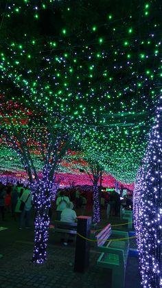Christmas in Canberra, Australia.