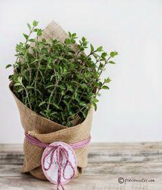 Le Frufrù: Facile e veloce: confezionare le erbe aromatiche