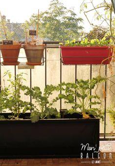 FAIRE POUSSER du chou kale sur un balcon Le Chou Kale, Pot Plante, Planter Pots, Cabbage, Gardens, Cooking Kale, Plant Cuttings, Sprouts, Cabbages