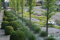 Ogród niby nowoczesny ale... - strona 1429 - Forum ogrodnicze - Ogrodowisko Perennial Plant, Buxus, Aberdeen, Planting, Perennials, Sidewalk, Country Roads, Gardens, Design