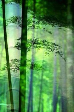 3-D shadowy bamboo forest