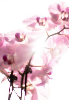 'Orchidee' von Fotostudio  S. Grey bei artflakes.com als Poster oder Kunstdruck $6.75