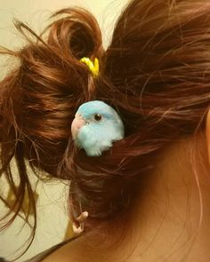 "9 Likes, 2 Comments - Brittany / Coley (@misscoleyu) on Instagram: ""#parrotlet"""