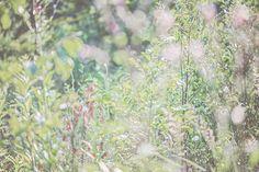 meadow mlodzikova-17