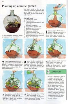 Planting up a bottle garden