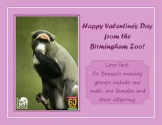 valentine's day at zoo lake