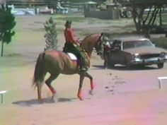 Hilda Gurney riding Keen at Meadows of Moorpark Circa 1987 Dressage News, Horse Videos, Hunter Jumper, Thoroughbred, Equestrian, Horses, American, Animals, Animales