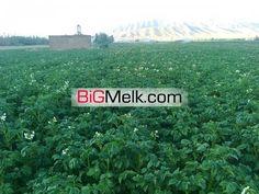 زمین زراعی 12000 متری با موقعیت عالی و قیمت مناسب