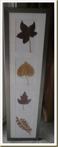 Leaf Project for the Fall