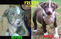 This is Freddy!   Some monster chemically burned this lil puppy. Thankfully he was rescued. This shows what a little love and compassion can do!!