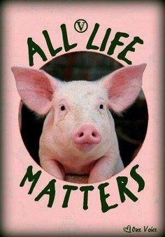 Pro vegan: All life matters. Try vegan. All Animals Are Equal, Reasons To Be Vegan, Vegan Quotes, Vegan Humor, Why Vegan, Stop Animal Cruelty, Vegan Animals, Animal Welfare, Animal Rights