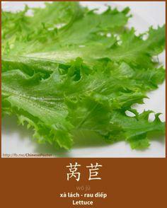 莴苣 - wō jù - Xà lách; rau diếp - Lettuce