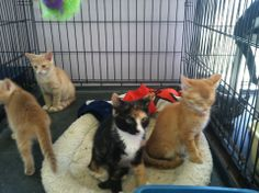 Kittens are available at the SPCA in Attica!!!