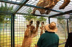 Idea de este Zoológico: ¡Encierra a los Humanos y no a los Animales!