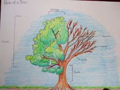 The Inspired Classroom: Photosynthesis, Pollination, Roots, Flower and Tree Parts