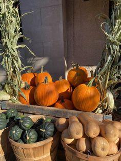 Habitually Chic® » October 2020 in New York Bon Weekend, Autumn Inspiration, Sunny Days, Happy Holidays, New York, October, Pumpkin, Seasons, Chic