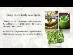 aceite de oregano EL ANTIBIOTICO MAS PODEROSO DEL MUNDO - YouTube