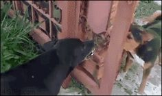 If I could get through this fence, I would DESTROY you !!!