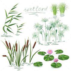 Wetland Plants Set (Vector EPS algae aquatic bog botany cane Carex c Pond Plants, Nature Plants, Aquatic Plants, Flowers Nature, Pond Drawing, Lilies Drawing, Lily Pad Drawing, River Drawing, Inkscape Tutorials