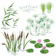 Wetland Plants Set (Vector EPS, CS5, algae, aquatic, bog, botany, cane, Carex, collection, Cyperus, decoration, drawing, ecology, flora, flower, isolated, lake, leaves, lily, lotus, nature, plants, pond, reed, river, set, simplified, variety, vector, water, wetland, wild)