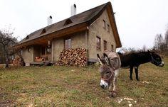 Sugi pula auf deutsch