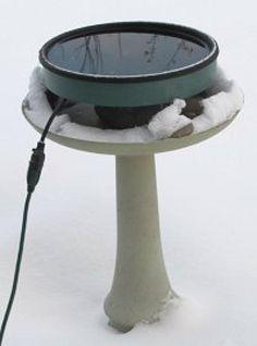 Heated Bird Bath Tips: A heated bird bath provides birds with water all winter long.