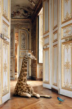 """""""I am in love with the photography by Karen Knorr and this year I have vowed to add more romance and fantasy into my work just as Knorr has."""""""