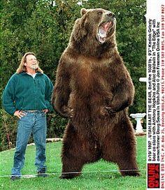 Kodiak and a medium sized man..!