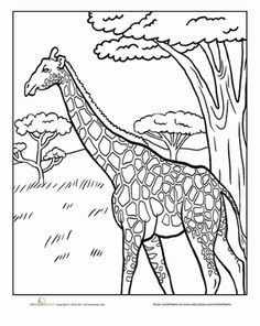 first grade animals nature worksheets giraffe coloring page