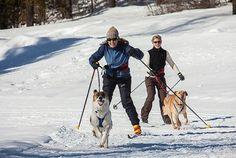 Montana Winter - cross country ski joring with dogs outside Bozeman