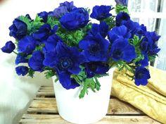 Wedding bouquets anemone blue 41 New Ideas Floral Wedding, Wedding Bouquets, Wedding Flowers, Wedding Bells, Blue Pottery, Cream Wedding, Diy Wedding Projects, Rustic Invitations, Pretty Flowers