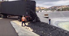 96 Million Balls Have Been Dumped Into The Los Angeles Reservoir To Combat The Drought Water Conservation, Stay Cool, Water Supply, Save Water, Saving Tips, Sun Lounger, Shades, California, In This Moment