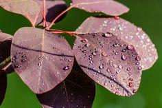 Raindrops by Sebastian Schmidt on 500px