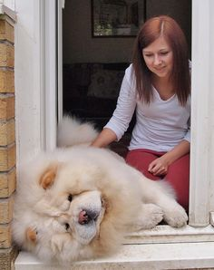 The Chow Chows are gorgeous ! The White chow chow even more http://hrenoten.com