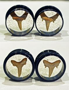 "Ready-to-ship 7/8"" 22mm shark tooth plugs with black titanium. Hang ten!"