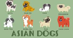 Adorable Drawings of Dog Breeds, Grouped by Their Place of Origin | More here: http://io9.com/adorable-drawings-of-dog-breeds-grouped-by-their-place-1638977820?utm_source=dlvr.it&utm_medium=appnet