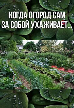 Garden Design Flower - New ideas Home Vegetable Garden, Home And Garden, Yard Design, Small Farm, Summer Diy, Permaculture, Trees To Plant, House Plants, Gardening Tips
