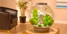 Baby Biorb... some people give it a lot of slack because they don't understand how it works, but we love ours... once cycled, it's perfect for our betta fish.