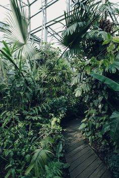 Haarkon Greenhouse Oxford Glasshouse Botanical Garden